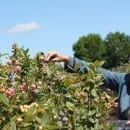 Lake-Catherine-Blueberry-me-picking-my-sweet-zepol