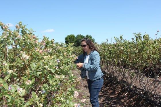 Lake-Catherine-Blueberry-picking-my-sweet-zepol