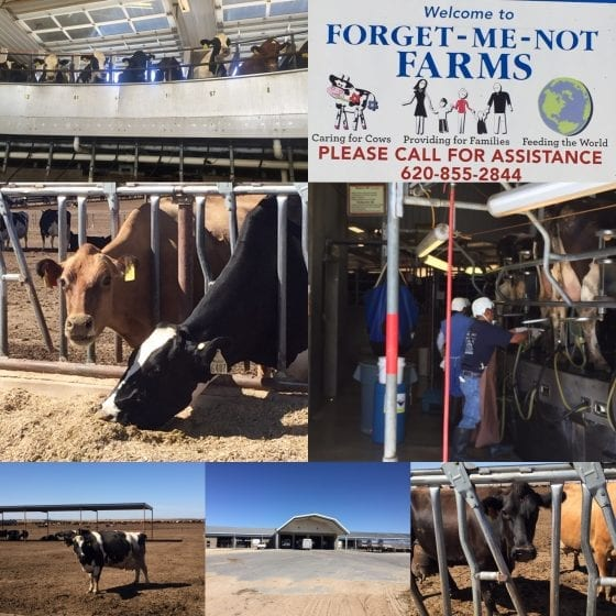 Forget-Me-Not Farms in Kansas / From farm to table, meet local farmers #FarmFoodTour / by My Sweet Zepol #foodblog