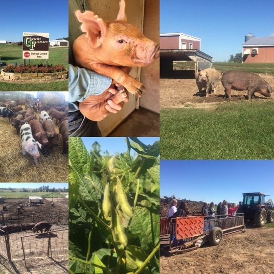 Good Farms, Kansas / From farm to table, meet local farmers #FarmFoodTour / by My Sweet Zepol #foodblog