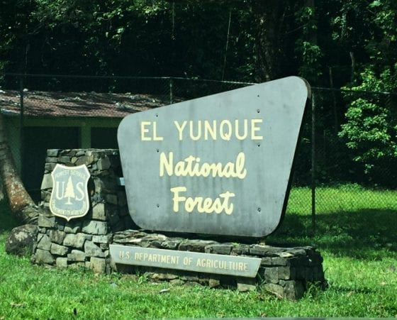 Once El Yunque National Forest in Puerto Rico comes back to life you must plan a trip and enjoy it's amazing hiking trails, #PuertoRicoStrong #travel