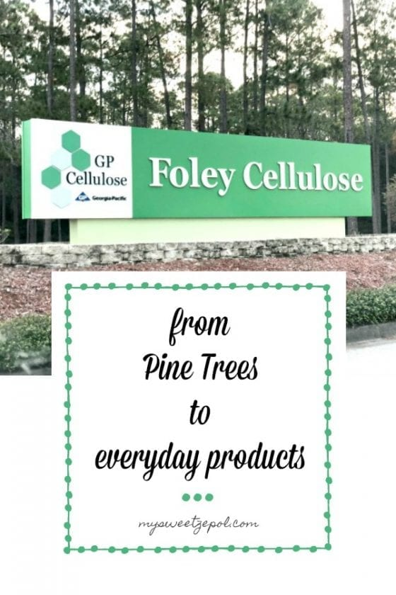 from pine trees to everyday products #GPinFL