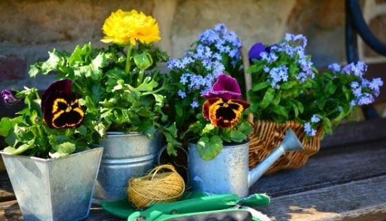 flower plants in pots with gardening tools