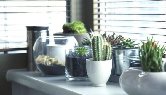 Easy indoor gardening tips