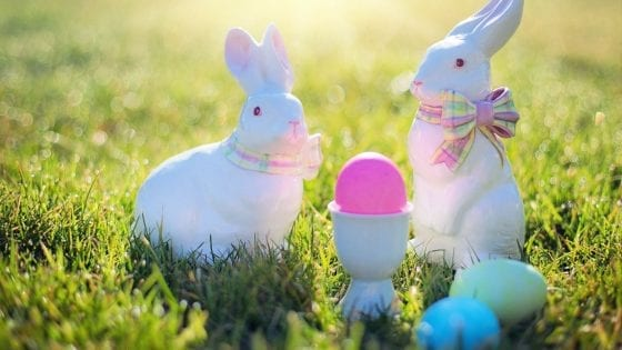 Easter Egg hunt outside, grassy area with bunnies