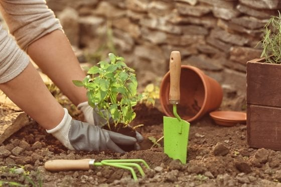 gardening tools for kids to garden at home. Green rake and green shovel, clay pot and green plant in soil