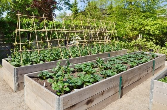 Tips for a Successful Raised Garden Bed