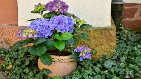 adding perennials to a container garden, colorful flowers