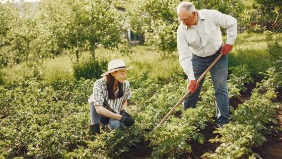 men and women weeding in a garden or field