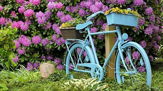 outdoor bike with baskets used as container garden, blue bike, colorful flowers, plants, outdoor, purple, green and yellow flowers