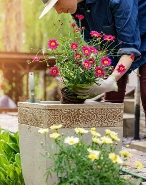 outdoor container garden, lady planing colorful flowers inside a container garden on a wooden deck