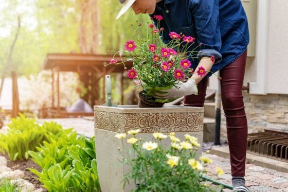 container garden and person planting flowers on a container outdoors. Colorful flowers, foliage and a deck area