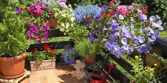 Plants growing on container gardens on a wooden deck, colorful plants and flowers