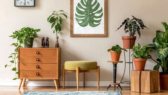 house plants in clay pots, green plants, flower vase over a dresser with green foliage