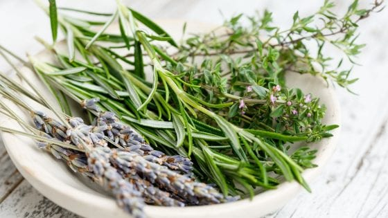 dry herbs vs fresh herbs, fresh herbs in a white bowl, rosemary, lavender and thyme