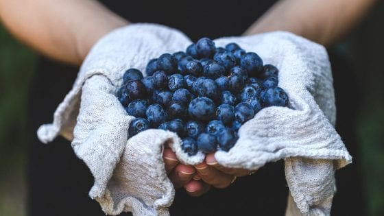 fresh blueberries in hand over a kitchen rag